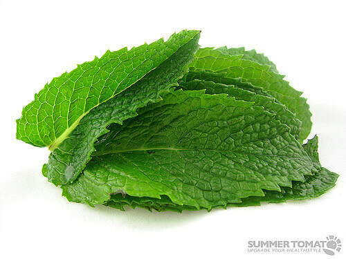 Mint Leaves Image